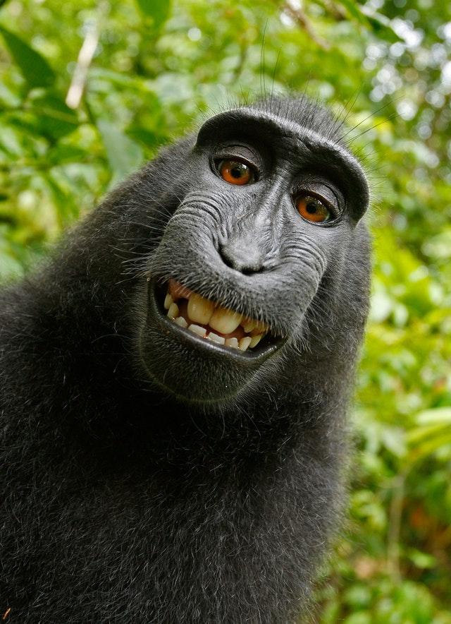 Funny Smiling Chimpanzee Barnegat Manahawkin Dentist